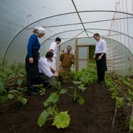 The Restaurant at Belleek Castle, Chefs in poly-tunnel, organic gardening, restaurant garden